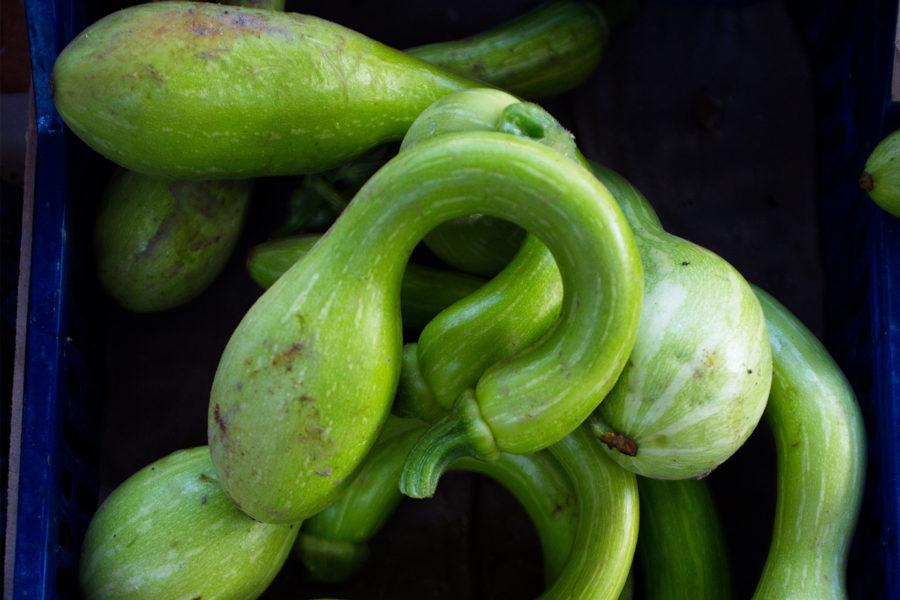 Zucchina Trombetta di Albenga | Flick on Food