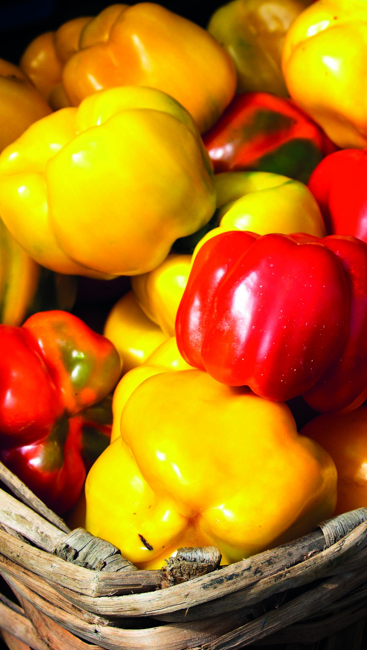 peperone di carmagnola | Flick on Food