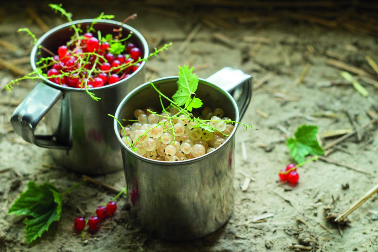 Ribes Bianco   Flick on Food